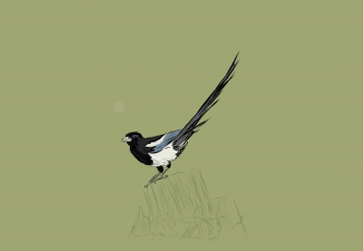 Magpies everywhere!