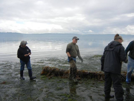A foggy day brings a muddy beach perfect for messy clam digging. The beaches are filled with large horse clams, gooey ducks, muscles, razor clams, crabs, and bounds of sealife. A short trip out to sea brings wild salmon and other Northwest fish.