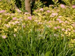 Flowering garden...
