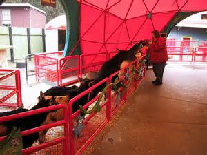 The awesome goat feeding zone is in a red circus tent-like structure, with several cute pygmy-style goats, as well as larger full-grown types.