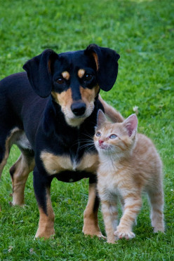 What to Do When a Pet Owner Gets Sick or Passes Away