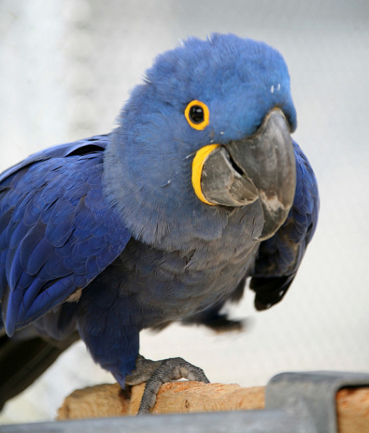 The zoo features an outstanding parrot haven, featuring several dozen or more birds in up close cages, as well as large macaws which are placed in the zoo courtyard.