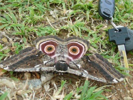 Very interesting butterfly at Maguga Dam, Swaziland