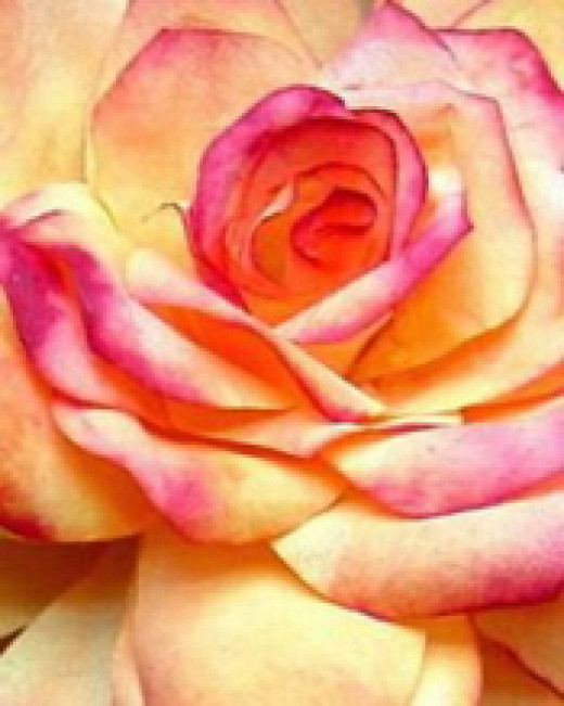Yellow and Pink-tipped Coffee Filter Rose - these roses are incredibly realistic