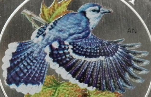 Detail of Blue Jay (2010)
