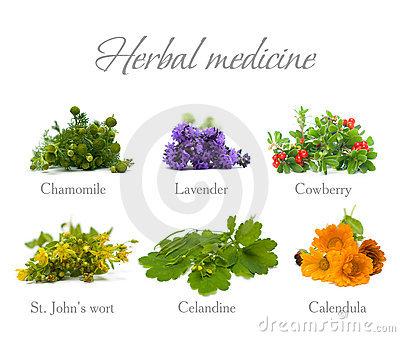Herbal Medicine: chamomile, lavender, calendula, celandine and St. John's wort - herbs and flowers