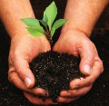How to Live a Greener Life: Tips for Everyday Sustainability
