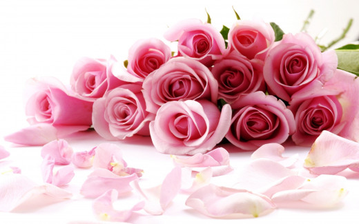 pink roses for your valentine