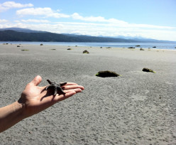 This little fellow was found on Savary Island, just across the way from Lund