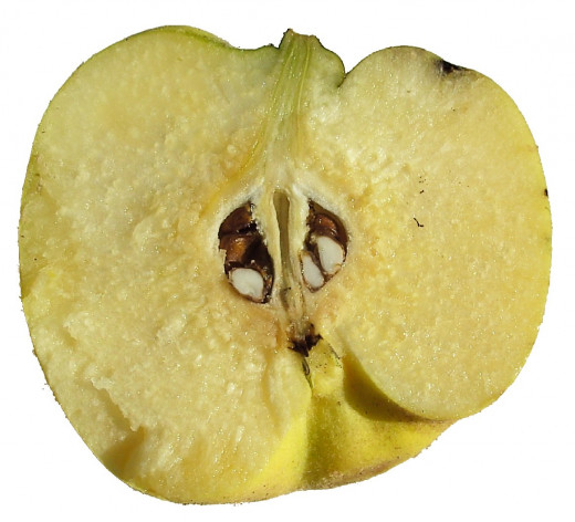 Quinces resemble apples and are closely related to them, but are not eaten raw. Learn how to cook and prepare quinces.