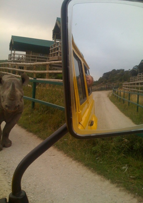 Cameron (my son) looking out the back window as a rhino comes past us, lodge on the right.