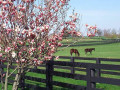 Things to Do in Lexington, KY in the Spring