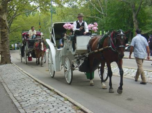 Nothing is more romantic than a carriage ride around Central Park!
