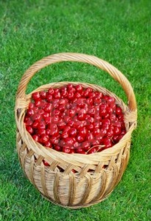 Is Bing a bowl of cherries?