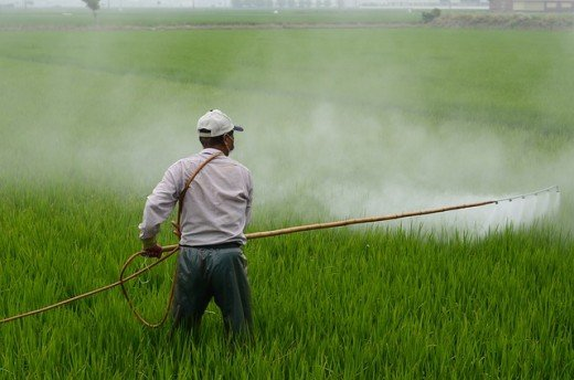 A farmer spraying his crops with herbicides. It is best to eat vegetables that aren't treated with chemicals.