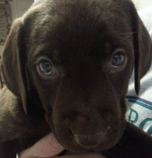 Arriving at our home in January, 2014. Just look at those eyes.