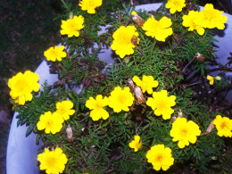 In Spring, she wears flowers in her hair...