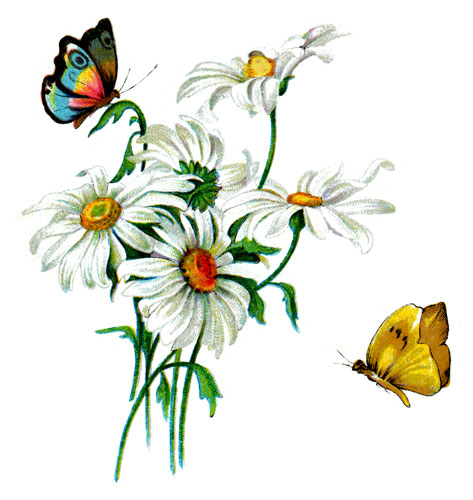 Daisy bouquet and butterflies.