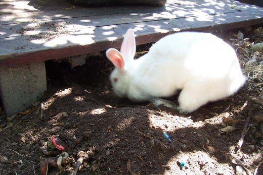 And digging...But our pets ate really well while they were with us (so did our kids). BunBun loved to dig in my garden. Me? Not so much.