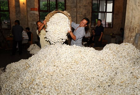 Silkworms Cocoons
