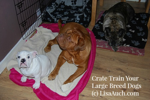Crate train your dogs responsibly.
