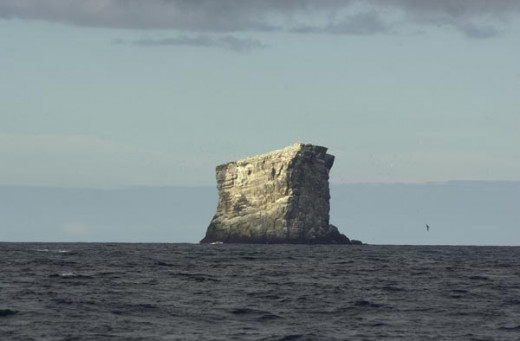 Eldey Island was the last known breeding site for the great auk