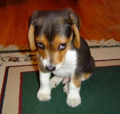 You are NOT a puppy to be scolded!