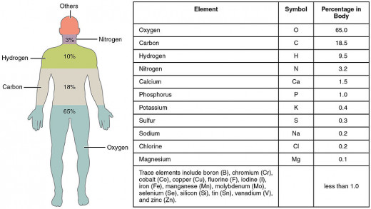The main elements that compose the human body are shown from most abundant to least abundant.