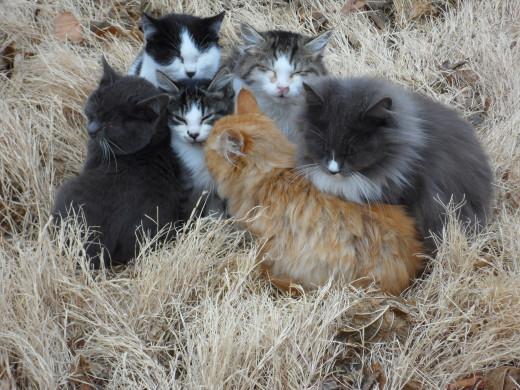 Image courtesy of http://feral-kitten-rescue.blogspot.co.uk/