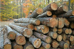 Timber : As A Material Of Construction