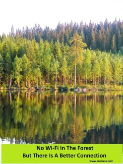 Health Benefits Of Just Being In A Forest