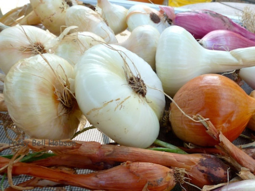 Just 2 inches across, when properly cured and stored, cipollini onions get milder and sweeter with time.