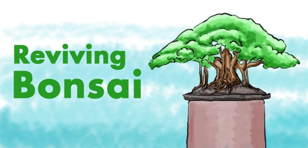 How To Revive A Dying Bonsai Tree Solutions That Work