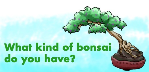 How to revive a dying bonsai tree solutions that work dengarden - Tell tree dying order save ...