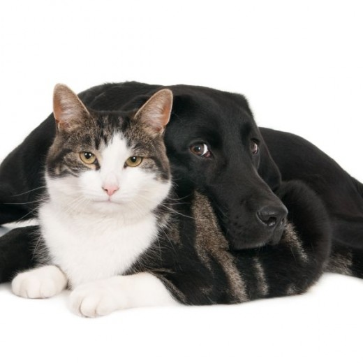 Cats and Dogs in Harmony