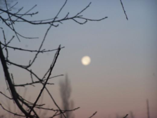 Moonbeams to spawn our dreams...
