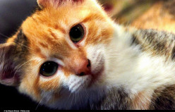 Things you should do when your Cat is a Kitten