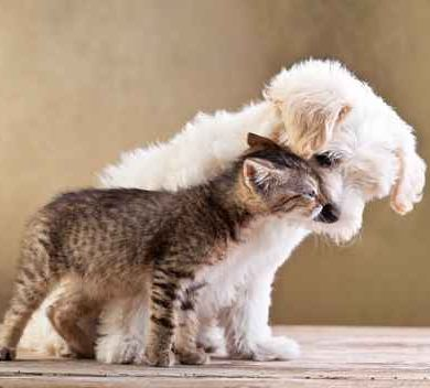 Cat and Dog making friends
