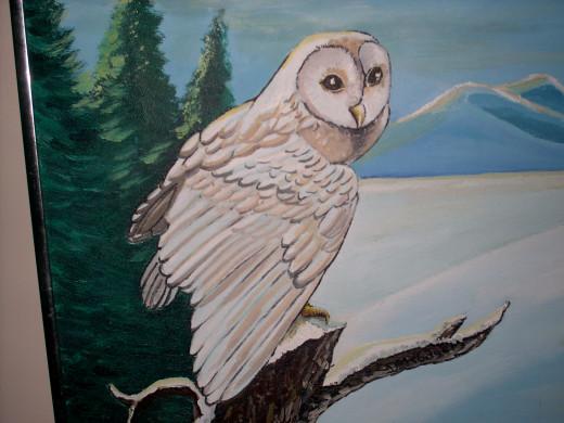Snowy Owl...