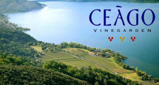 Ceago winery is located on one of the most scenic and largest natural lake in all of california, Clear Lake. It's about an hour drive or so from the Napa Valley but well worth it because there a many wineries around the lake.