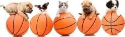 Sporty Dog Names | 30 Basketball Inspired Names for Dogs