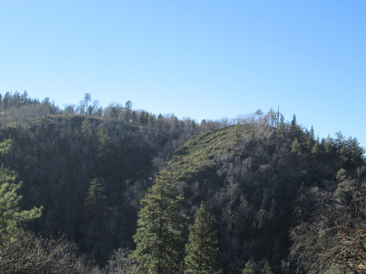 Another view of trees growing on a hillside in the distance.