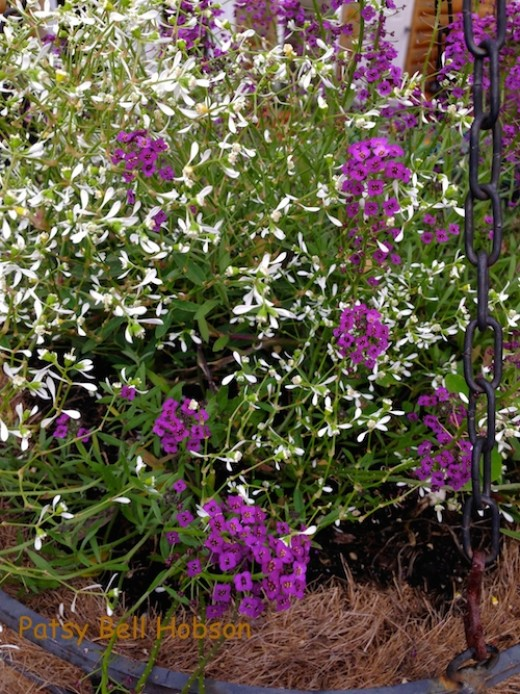 Loads of sweet little lavender flowers.