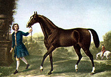 The Darley Arabian, one of the three traditional foundation sires of the thoroughbred