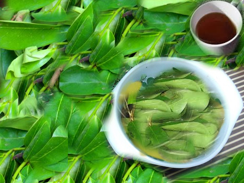 soursop leaves/ tea