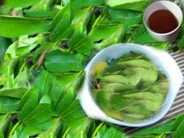soursop leaves/ tea