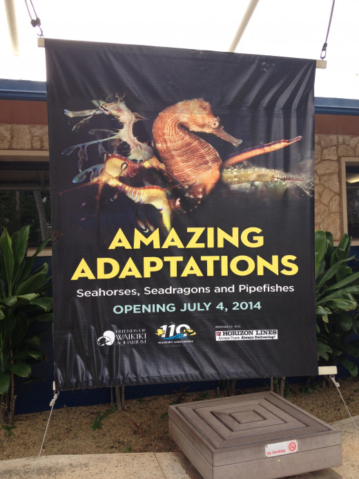 "Featuring ""Amazing Adaptations"" A presentation on Seahorses, Seadragons, and Pipe fishes."