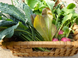 Thinning plants will make for a more productive garden.