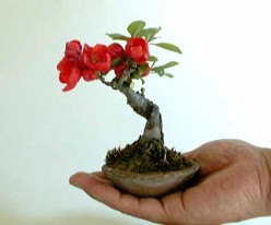 Beginning Bonsai Tips and Tricks for Beginners