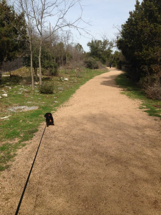 Cat Hollow Park Round Rock TX - Walking and Running Trail